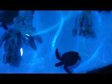 аквапарк - подводный мир